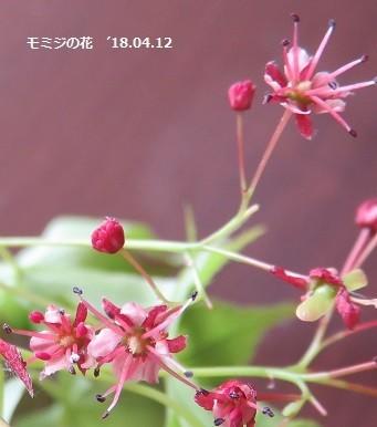 f:id:mikawakinta63:20180413170255j:image