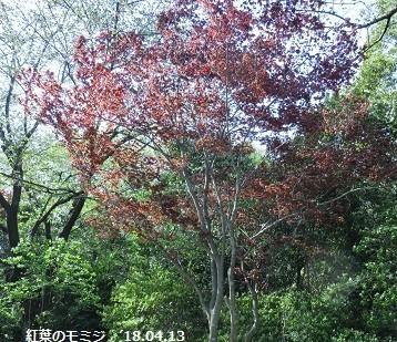 f:id:mikawakinta63:20180413182249j:image