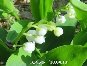 f:id:mikawakinta63:20180416140731j:image:left