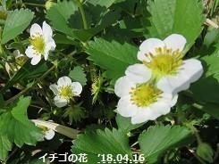 f:id:mikawakinta63:20180416150343j:image:right