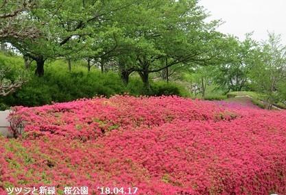 f:id:mikawakinta63:20180417135926j:image