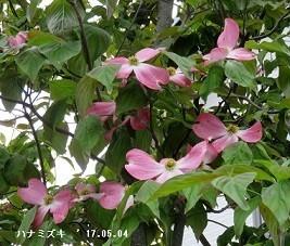 f:id:mikawakinta63:20180503195051j:image:left