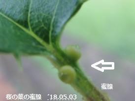f:id:mikawakinta63:20180504105246j:image:right