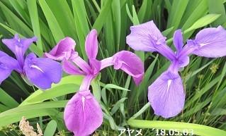 f:id:mikawakinta63:20180504124924j:image:left