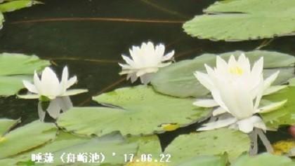 f:id:mikawakinta63:20180604125551j:image