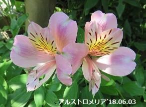 f:id:mikawakinta63:20180604150152j:image:right
