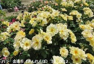 f:id:mikawakinta63:20180605151636j:image:left