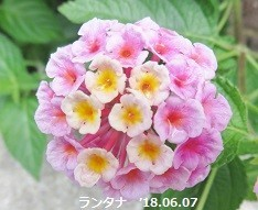 f:id:mikawakinta63:20180607145659j:image:left