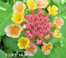 f:id:mikawakinta63:20180607150208j:image:left