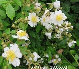 f:id:mikawakinta63:20180609130144j:image:right