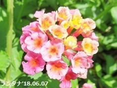 f:id:mikawakinta63:20180609140046j:image:right