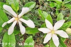 f:id:mikawakinta63:20180609174745j:image:left