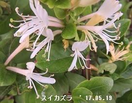 f:id:mikawakinta63:20180611145519j:image:left