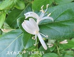f:id:mikawakinta63:20180612170416j:image:left