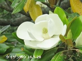 f:id:mikawakinta63:20180618123713j:image:left