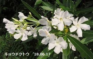 f:id:mikawakinta63:20180619145037j:image:left