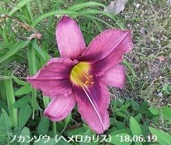 f:id:mikawakinta63:20180623181514j:image:left