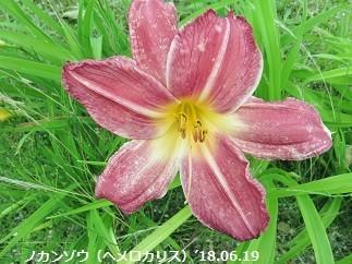 f:id:mikawakinta63:20180625154202j:image:left