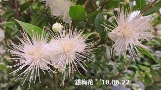 f:id:mikawakinta63:20180626153159j:image:right