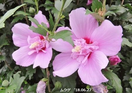 f:id:mikawakinta63:20180627135836j:image