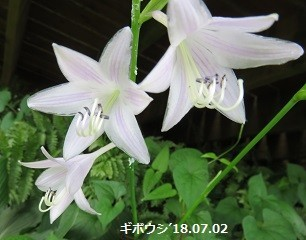 f:id:mikawakinta63:20180705135547j:image:right
