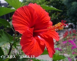 f:id:mikawakinta63:20180712130723j:image:left