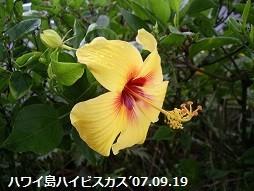 f:id:mikawakinta63:20180712140039j:image:right