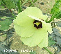 f:id:mikawakinta63:20180712162618j:image:right