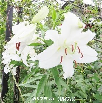 f:id:mikawakinta63:20180713151041j:image