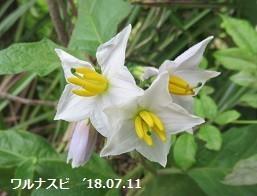 f:id:mikawakinta63:20180713154109j:image:right