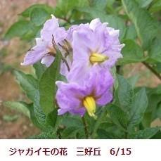 f:id:mikawakinta63:20180713154641j:image:left