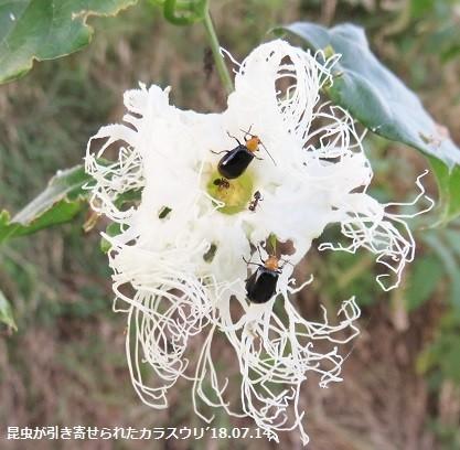 f:id:mikawakinta63:20180716135606j:image