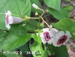 f:id:mikawakinta63:20180716142037j:image:left