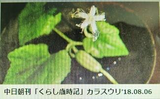 f:id:mikawakinta63:20180808172635j:image:left
