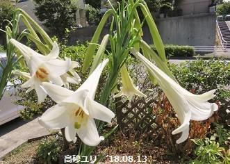 f:id:mikawakinta63:20180814151912j:image:left