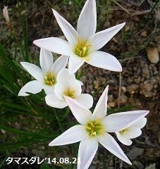 f:id:mikawakinta63:20180908174611j:image:left