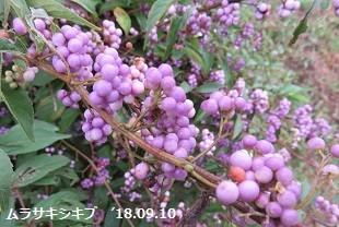f:id:mikawakinta63:20180911150025j:image:right