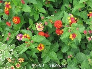 f:id:mikawakinta63:20180915205803j:image:right