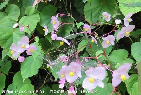 f:id:mikawakinta63:20180920195458j:image