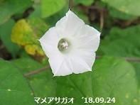 f:id:mikawakinta63:20180925214040j:image:right