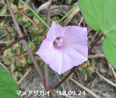 f:id:mikawakinta63:20180925215058j:image:left