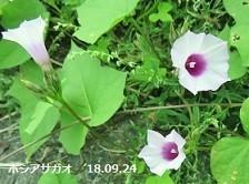 f:id:mikawakinta63:20180925215347j:image:right