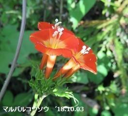 f:id:mikawakinta63:20181003170229j:image:left