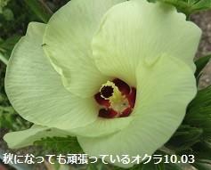 f:id:mikawakinta63:20181003170451j:image:left