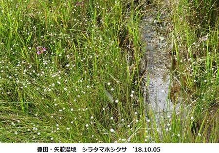 f:id:mikawakinta63:20181005203416j:image