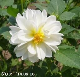 f:id:mikawakinta63:20181011164612j:image:right