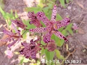 f:id:mikawakinta63:20181018131203j:image:left