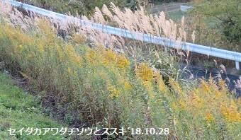 f:id:mikawakinta63:20181031161229j:image:right