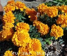 f:id:mikawakinta63:20181107170445j:image:left