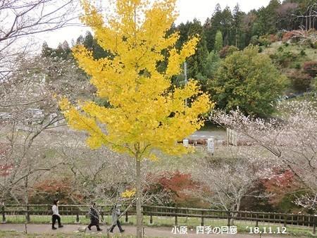 f:id:mikawakinta63:20181112200618j:image